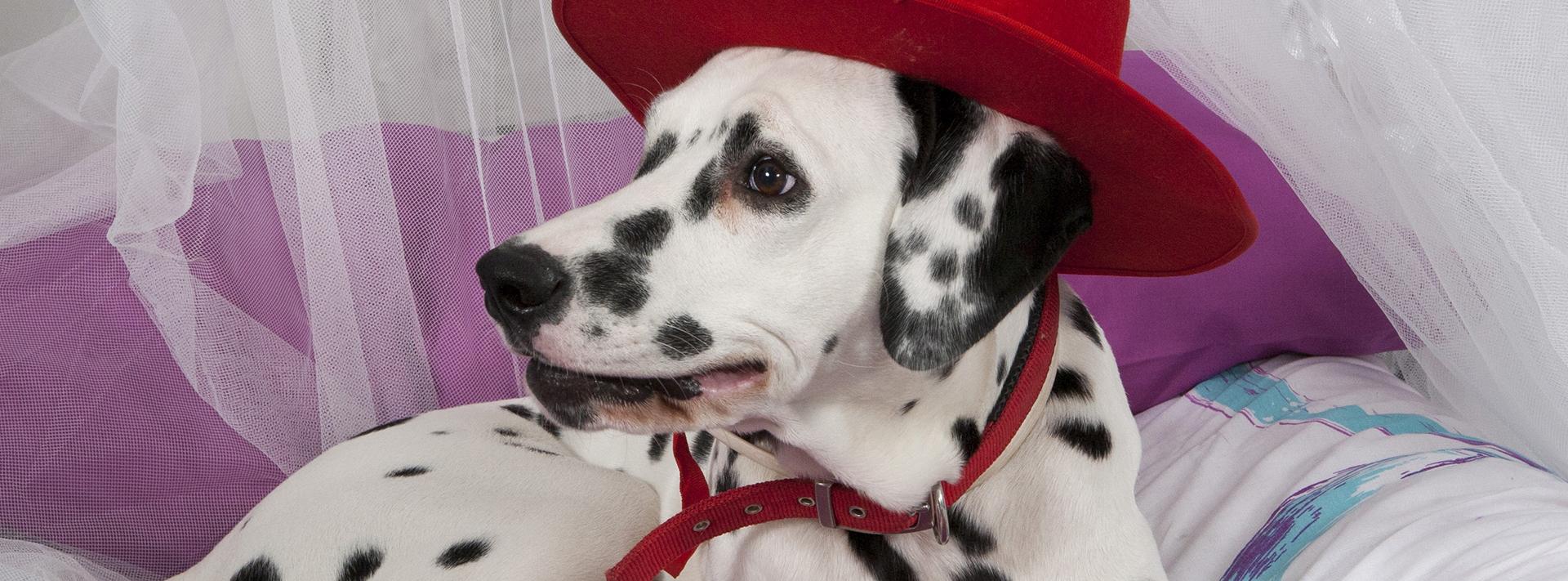 fotos-de-mascotas-fuenlabrada-bjfotografia